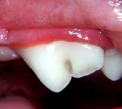 Dental Care China Grove Animal Hospital